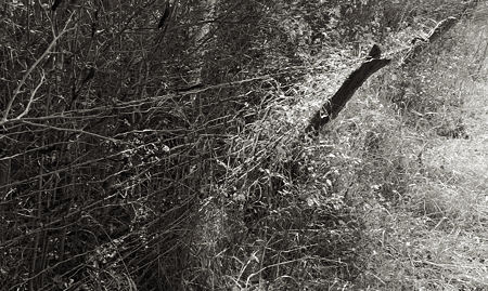 Sourdough Trail fenceline