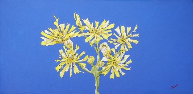 Cow Parsley by Annie Bailey